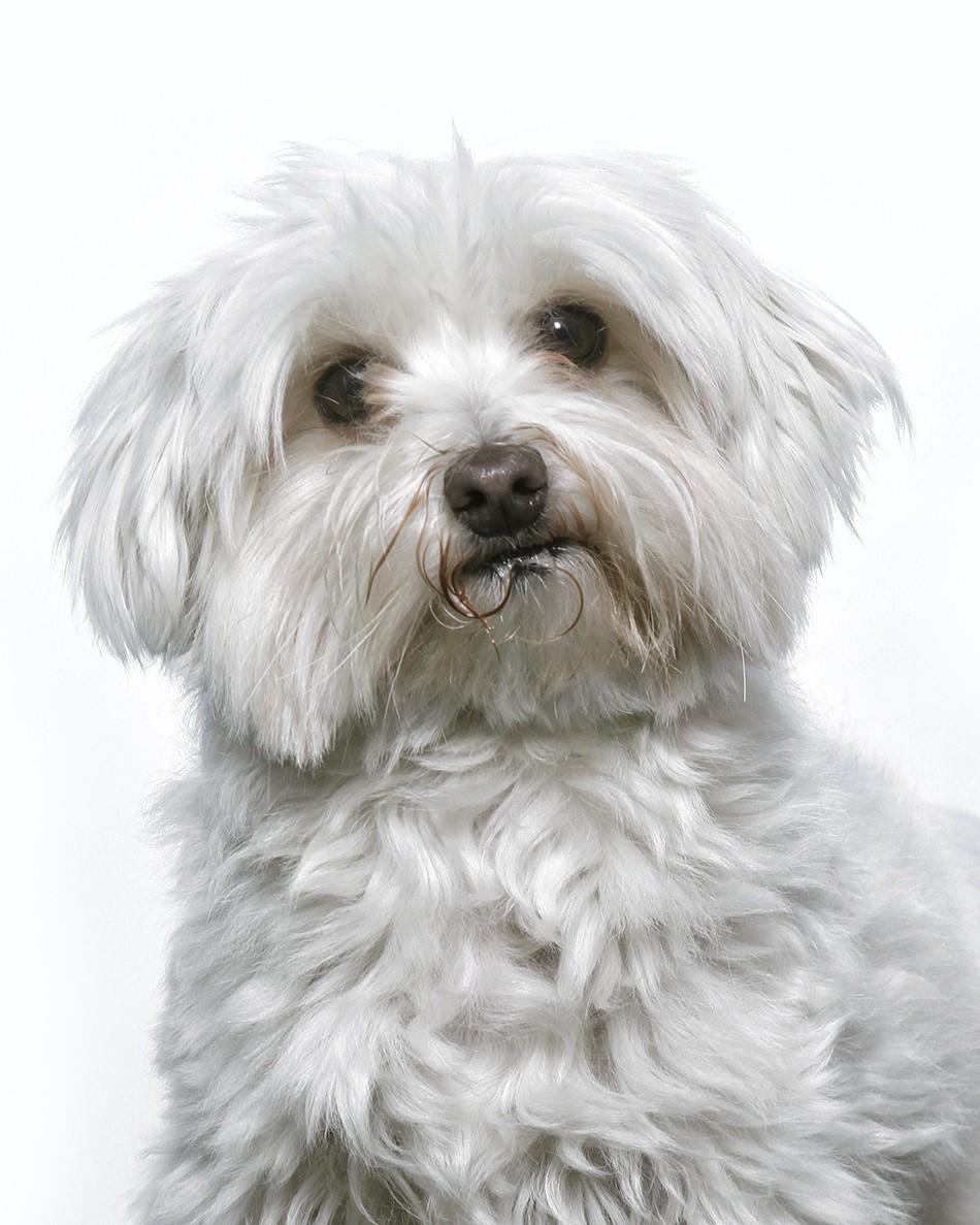 fotografo-mascotas-almeria-perros